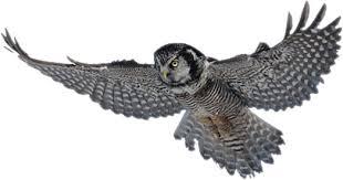 owl image2